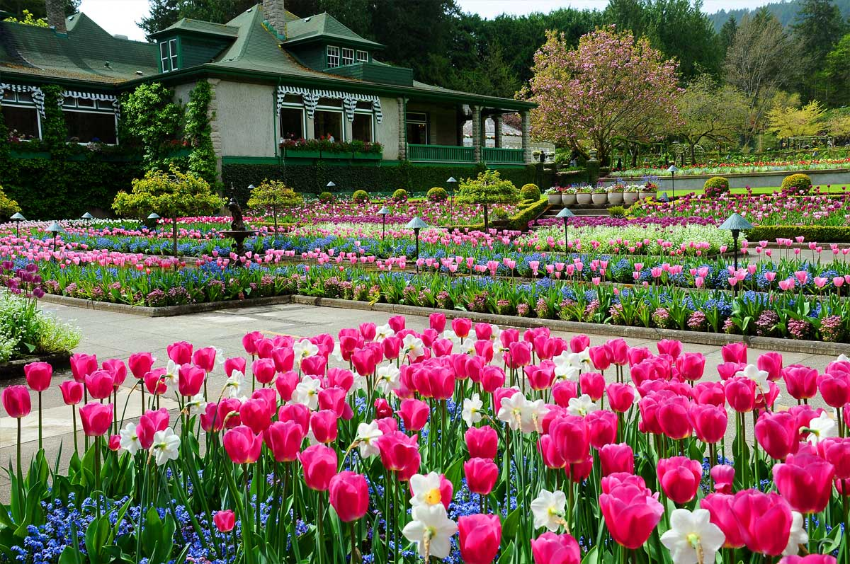 a report on a beautiful garden Beautiful-gardenru is tracked by us since december, 2017 it was hosted by shared hosting block 6 beautiful-garden has the lowest google pagerank and bad results in terms of yandex topical citation index.