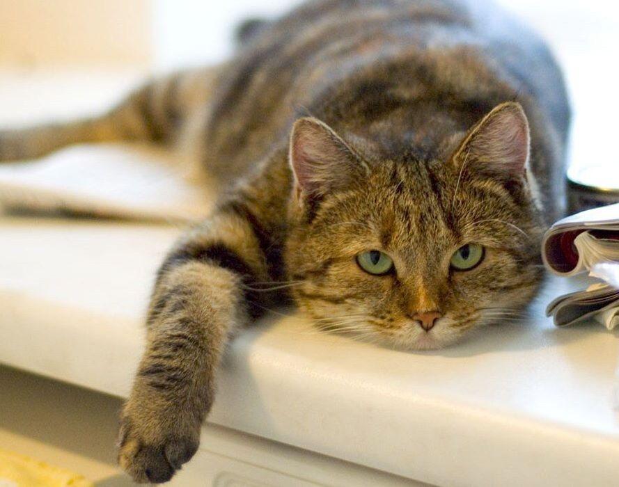 В каком возрасте котики стареют? (как подсчитать)