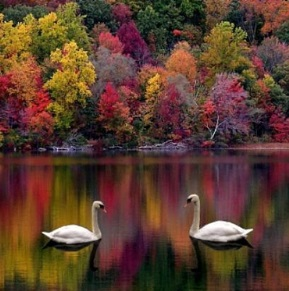 Картинки очарование природы